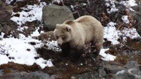 grizzlybeer