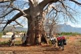 drankje onder baobab