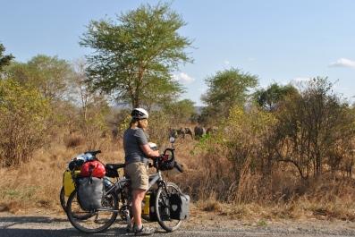olifanten langs de weg
